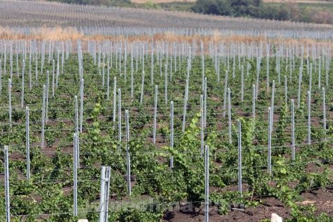 Bulgaria Hopes to Make Wine Its 2013 Success Stories