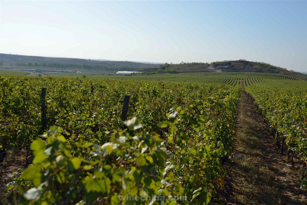 青岛大好河山葡萄酒业有限公司由卢森堡农业投资有限公司于2008年投资