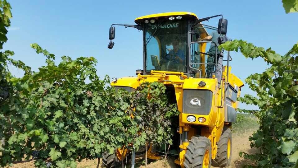 日期:2014-10-09 13:23:41 作者:辛悦   近日,记者获悉,今年的葡萄收获季节,张裕在烟台的基地机械采摘正式开机。在采摘现场,记者看到多台葡萄采摘机在葡萄园忙碌的工作着。  据了解,该葡萄采摘机由法国格瓜尔公司GREGOIRE生产,每小时采摘葡萄8亩到10亩,大大的节省了人工采收的成本。GREGOIRE可提供牵引式和机动式设备,用于所有高度和地形的宽/窄行距的葡萄园,其旋摆式采摘机头配备一个坚固的聚合材料弹性振动筛,具有很强的机动性,不会伤害葡萄树,采摘灵活、性能高及调节功能强。机械化将