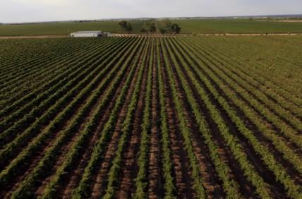 李嘉诚旗下公司1570万澳元收购澳大利亚葡萄园
