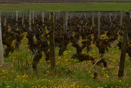 Sauternes producers to open wine co-operative