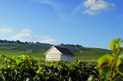 Roederer opens private vineyard nursery