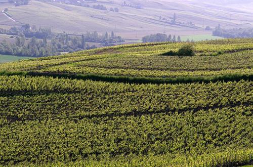 Ratafia de Champagne spirit awarded appellation status