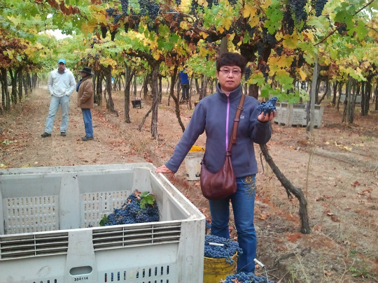 Chinese Winemakers (71) Yu Ying:To be winemaker with awe