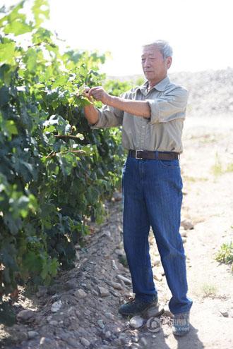 【中国人的一天】贺兰山下的葡萄酒庄园