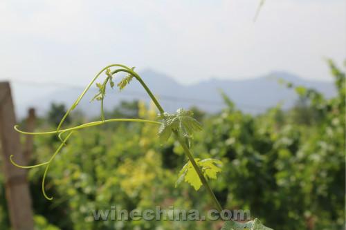 2015中国优质葡萄酒挑战赛获奖产品鉴赏(27)贺兰晴雪酒庄