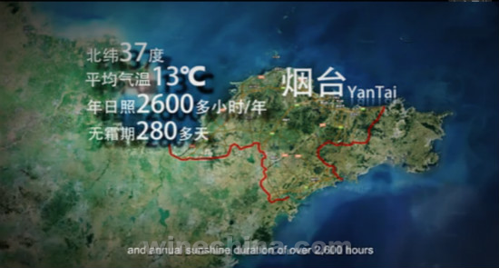 Video:Yantai Wine Region