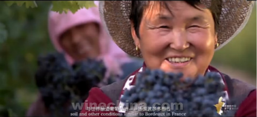 Video:An Open China:From Ningxia to the World