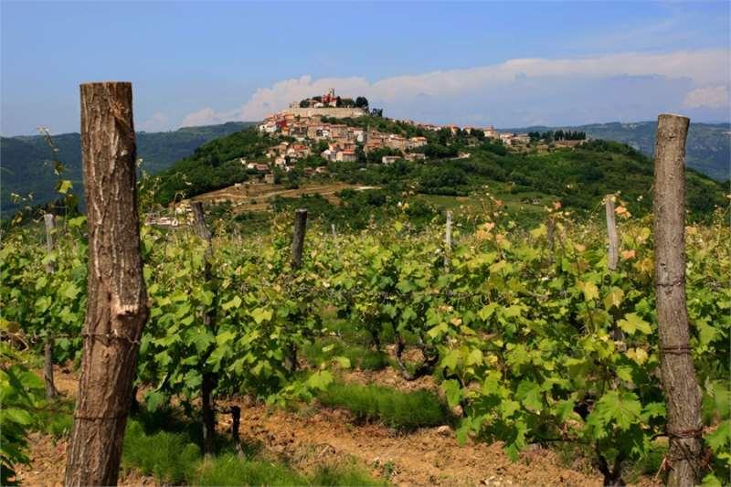 你不知道的欧洲五大葡萄酒胜地
