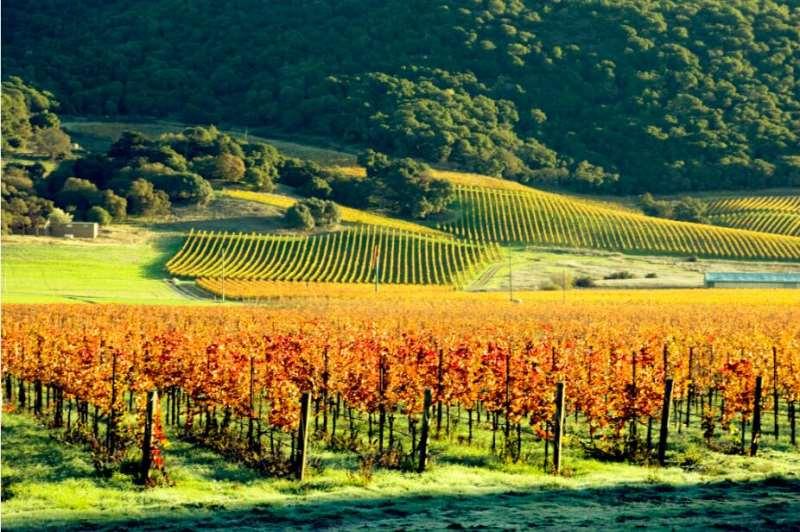 专家有话说:美国葡萄酒旅行必去产区