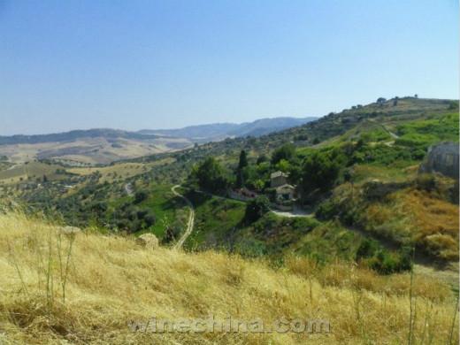 西西里岛的原野 葡萄园