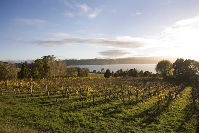 澳大利亚不容错过的葡萄酒胜地