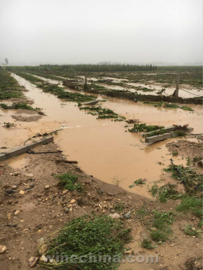 2016 Vineyard Report (21) Flash Floods Hit Ningxia Vineyards