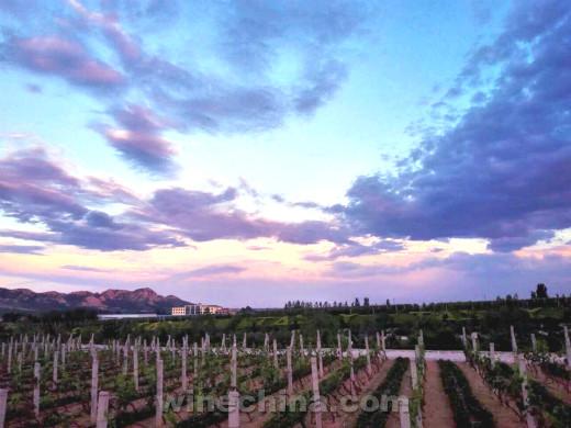带您走进金士国际葡萄酒庄
