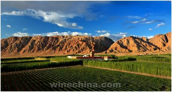 Video:Take you to Xinjiang Wine Regions