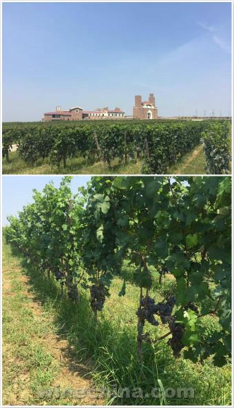 2016葡萄园报告(26)胶东产区:部分酒庄榨季开始啦!