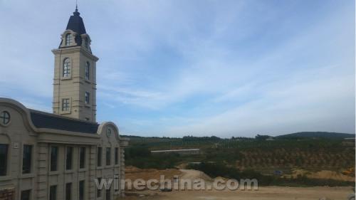 2016葡萄园报告(32)东北产区辽东半岛葡萄采收基本结束