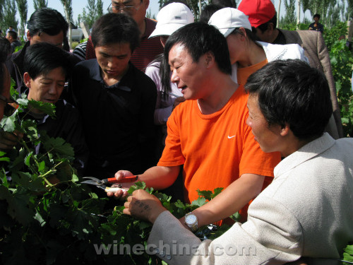 中国酿酒师风采录(137)李华:耕土耕心 酿酒酿人