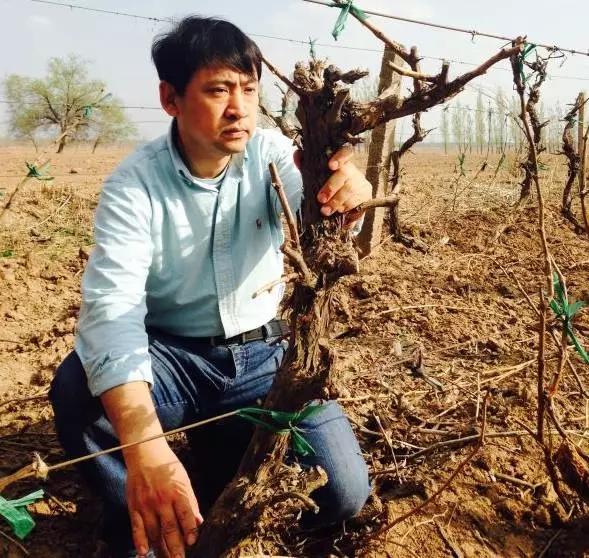 李景明:我们有能力为当代葡萄酒世界,贡献一个超级消费市场!