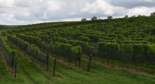 那些被遗忘的葡萄酒文化发源地