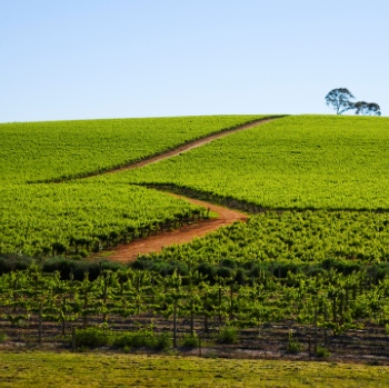 Chinese Winery's Plan For Australia Faces Delay