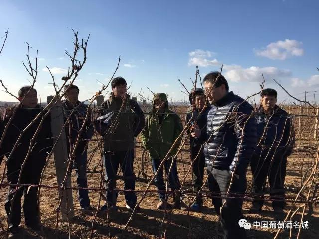 蓬莱葡萄与葡萄酒局开展葡萄冬季管理指导工作