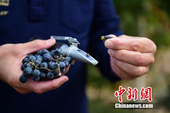 张裕公司荣获2016年度国家科学技术进步奖