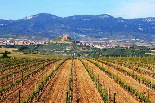 探寻西班牙优秀产酒区