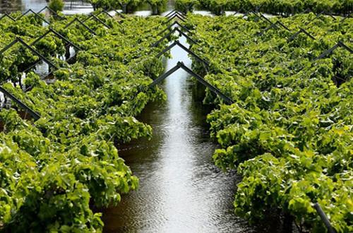 西澳大利亚的天鹅谷地区经历了严重的洪灾,成为洪涝重灾区。