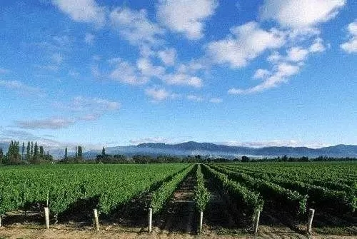 青铜峡已成为国内外葡萄酒企业的最佳投资热土