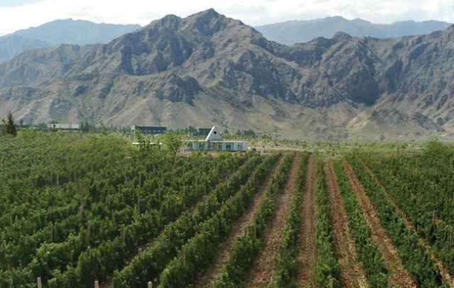 Ningxia Eyes Coastal Provinces To Expand Domestic Market
