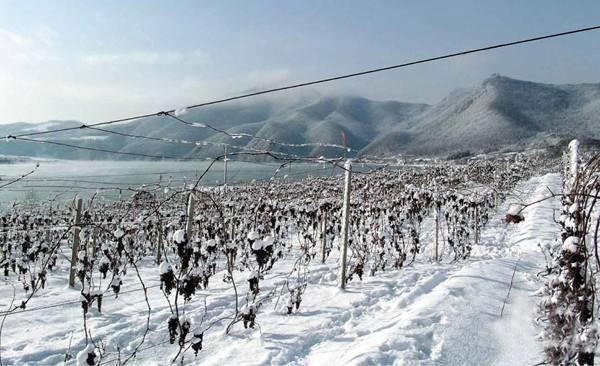 全国知名品牌创建示范区落户五女山葡萄酒产业园