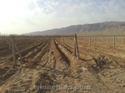 2017Vineyard Report:Southern Xinjiang