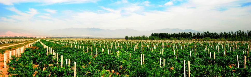 贺兰山东麓青铜峡葡萄酒产区在吴忠举办推介会