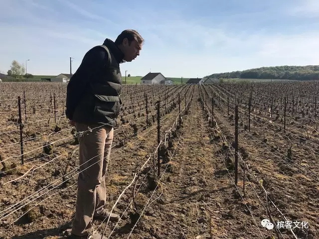 2017年春霜灾难性毁灭整个香槟区