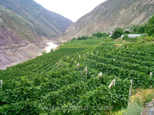 【品质十年】金牌酒庄(8)香格里拉:诠释中国风土