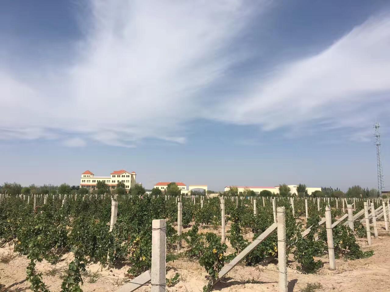 【葡粹动态】三十八度:做大产区的小酒庄,酿最精品葡萄酒