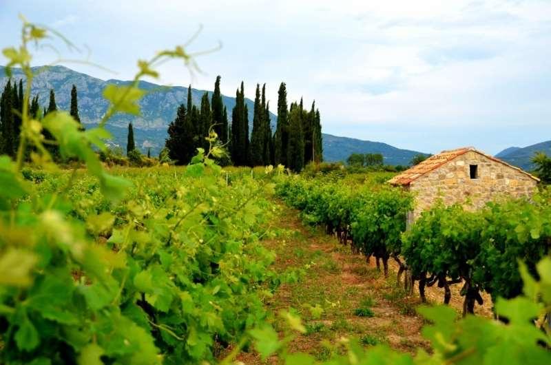 旅游胜地克罗地亚有什么葡萄酒?