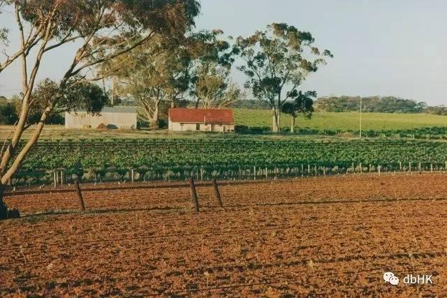 澳洲名庄Torbreck发现罕见品种老藤