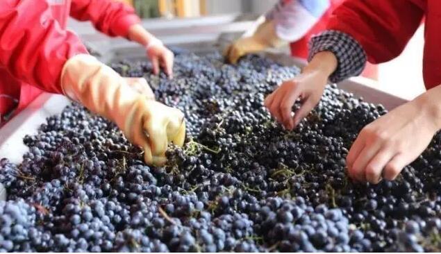 拭目以待!苏菜遇上贺兰山东麓葡萄酒,将呈现怎样的味觉盛宴