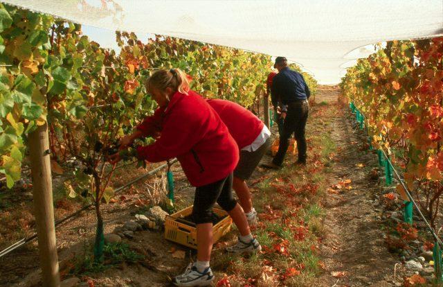 France Facing Smallest Harvest Since 1945