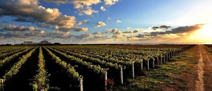 """""""砥砺奋进的五年""""系列报道之蓬莱葡萄与葡萄酒产业基地建设篇"""
