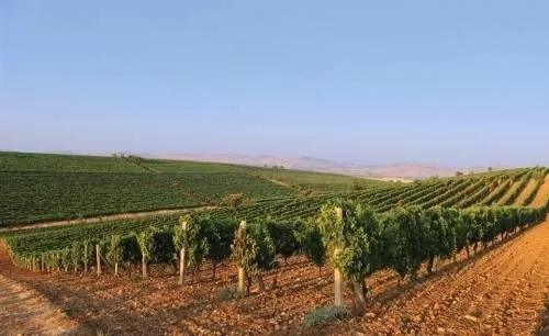 Basilicata大区 Aglianico 葡萄酒2012年份预品