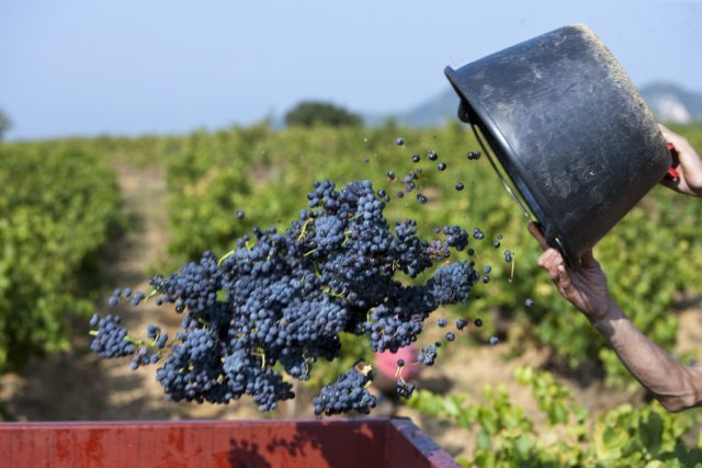 Rabobank:Small 2017 Harvest Drives Up Bulk Wine Prices