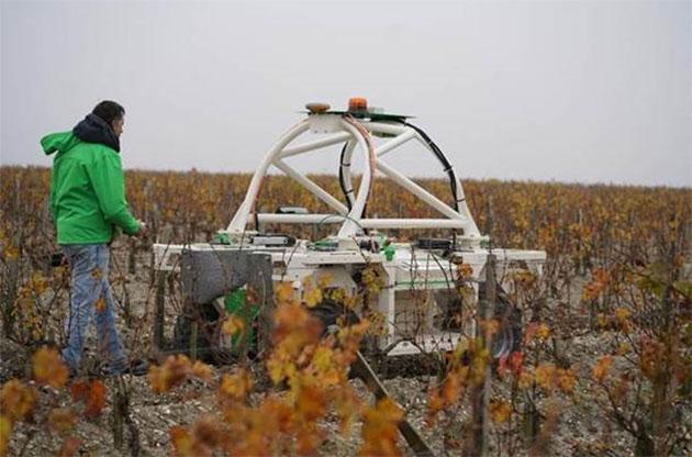 克拉米伦酒庄试用葡萄园机器人