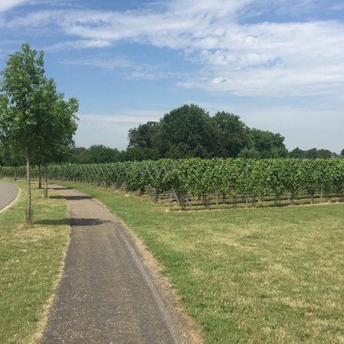 荷兰首个欧盟PDO葡萄酒产区获批