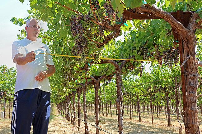 新科技:加州将采用卫星技术助力葡萄园灌溉