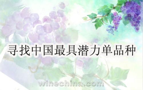 寻找中国最具潜力单品种(5)番外篇:下一个会是谁?!