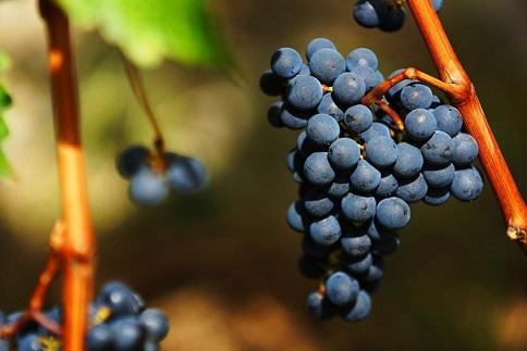 """美到窒息的香格里拉 CGTN法语频道为什么说她是""""中国葡萄酒的一流产区"""""""