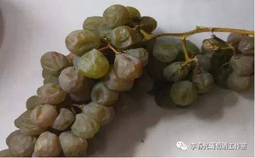 中国酿酒师笔记(十三)不经一番寒彻骨,怎得冰白沁鼻香